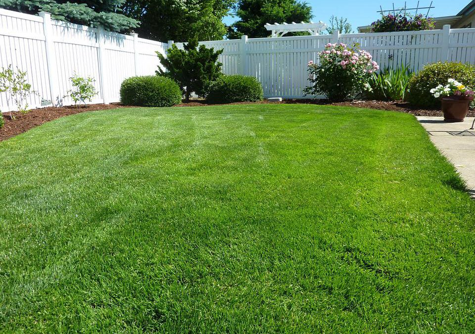 How to keep your grass lush and green during the hot summer.